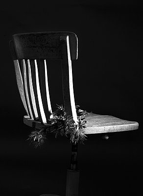 Chair and Eryngium alpinim - p1371m1225731 by Virginie Perocheau