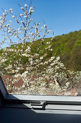 Frühling vor dem Fenster - p900m1515159 von Michael Moser
