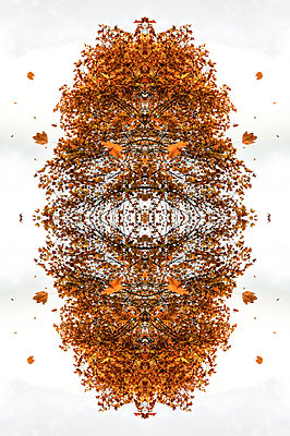 Abstract kaleidoscope pattern of autumnal tree canopy with leaves blowing in the wind - p1047m2204346 by Sally Mundy