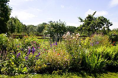 A flowery garden Gotland Sweden. - p31221442f by Peter Rutherhagen