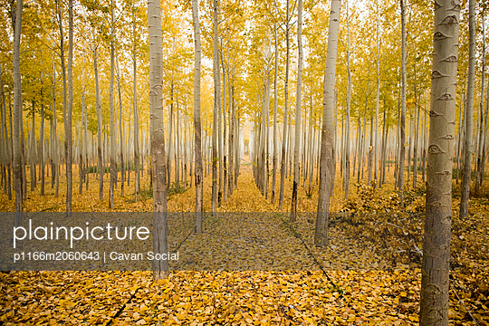 Scenic view of trees amidst yellow fallen leaves in forest during autumn - p1166m2060643 by Cavan Social