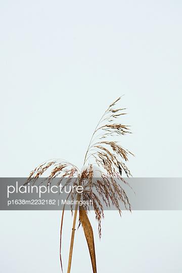 p1638m2232182 by Macingosh