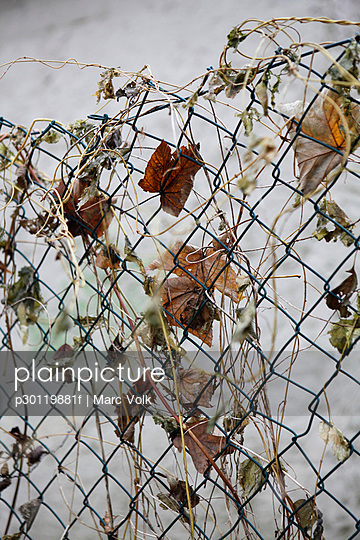 Dead leaves on wire fence