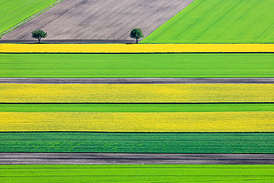 Germany, Bavaria, aerial view of fields landscape with two trees - p300m1115085f by Klaus Leidorf