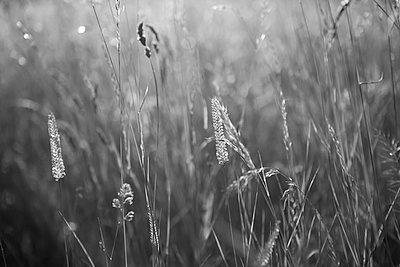 Meadow with wild flowers - p308m2124868 by Ellen Bornkessel