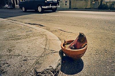 Pig's head at the roadside - p1171m1461921 by SimonPuschmann