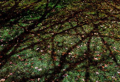 Schattenspielwiese - p228m822084 von photocake.de