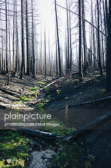 p1100m2060935 von Mint Images