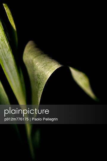 p912m776175 von Paolo Pellegrin