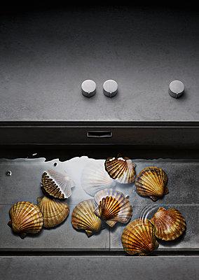 Muscheln im Wasserbecken, Meeresfrüchte, Essen - p1316m1161150 von Robert Striegl