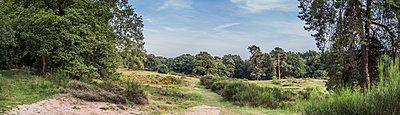 Heidelandschaft - p401m1590164 von Frank Baquet