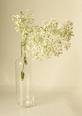 White flowers - p6850081 by Lena Kah