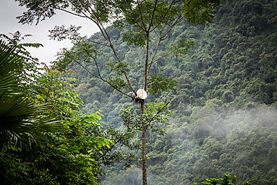 A megaphone hangs in a tree - p934m1451247 by Francis Roux photography