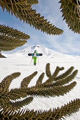 Snowboarder mit Schneeschuhen steigt auf, Chilenische Andentannen im Vordergrund, Skigebiet Corralco, Lonquimay, Araukanien, Chile - p1316m1160954 von Michael Neumann