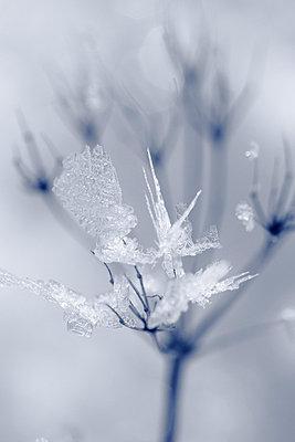 Eiskristalle - p2351394 von KuS