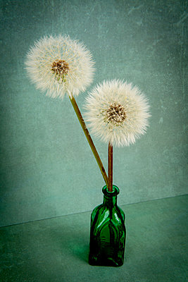 Dandelions - p451m2278314 by Anja Weber-Decker