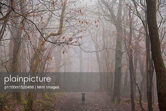 p1100m1520456 von Mint Images