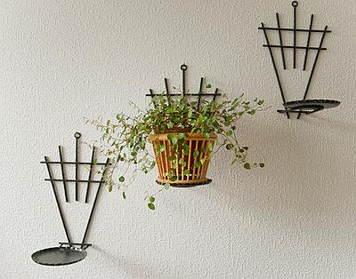 Indoor plant - p971m763909 by Reilika Landen