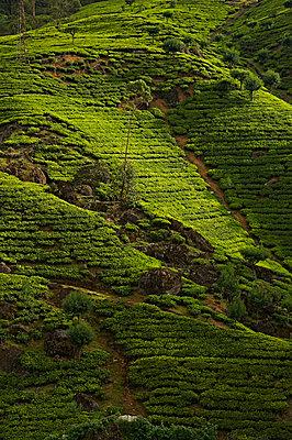 Fahrt nach Kandy - p1259m1109547 von J.-P. Westermann