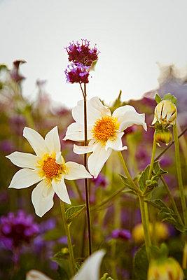 Blumen - p382m894071 von Anna Matzen