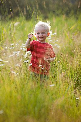 Caucasian boy admiring flowers in tall grass - p555m1411551 by John Lee