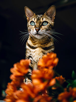 Cat and flowers - p1522m2093451 by Almag