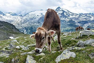 Berge - p713m2122586 von Florian Kresse