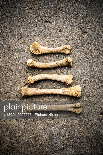 Fünf Knochen in paralleler Anordnung - p1302m2027775 von Richard Nixon