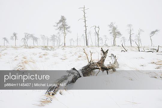 p884m1145407 von Michel Lucas/ NIS