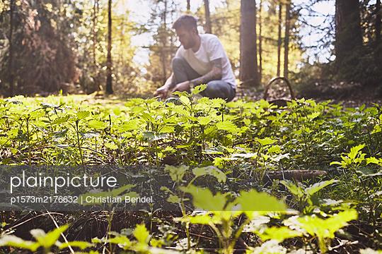 Harvesting stinging nettles - p1573m2176632 by Christian Bendel