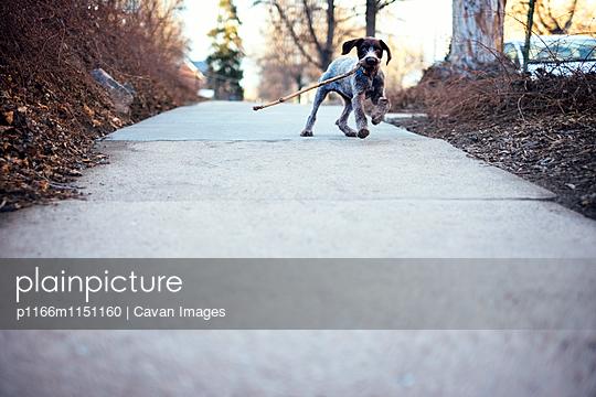 p1166m1151160 von Cavan Images
