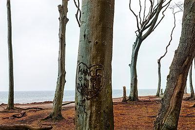 Gespensterwald von Nienhagen an der Ostseeküste - p1168m1355221 von Thomas Günther
