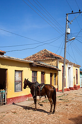 Saddle horse in front of house - p304m1093923 by R. Wolf