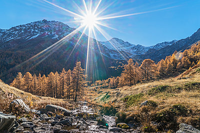 The sun over larch forest in Swiss Alps, Bettmeralp, Valais, Switzerland - p429m1418004 by Lost Horizon Images