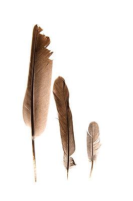 Three feathers - p8130333 by B.Jaubert
