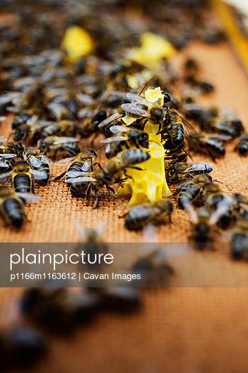 p1166m1163612 von Cavan Images