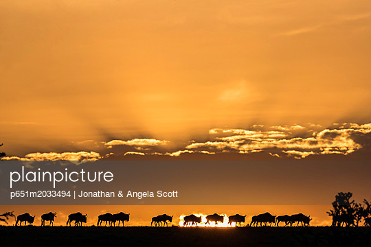 p651m2033494 von Jonathan & Angela Scott