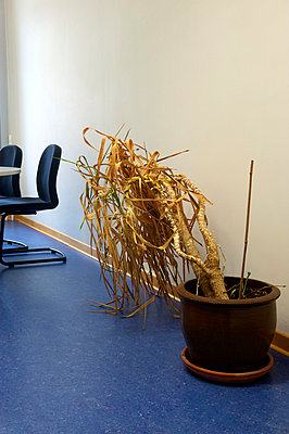 Office plant - p1164m951943 by Uwe Schinkel