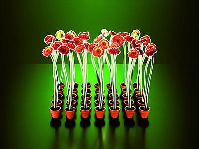 Paper flowers - p803m2270199 by Thomas Balzer
