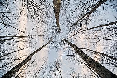Trees seen from below - p343m1475676 by Chris Bennett