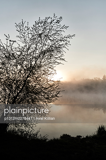 Germany, Tree on the lakeside with sun and fog - p1312m2278441 by Axel Killian