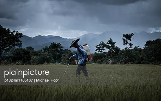 Reisbauer sprüht Schädlingsbekämpfungsmittel - p1324m1165187 von michaelhopf