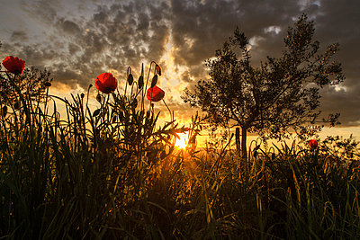 Sunset over rural landscape, Istria, Croatia - p1026m906881f by Romulic-Stojcic