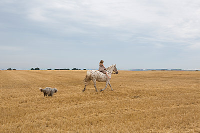 Riding horse - p294m1069507 by Paolo