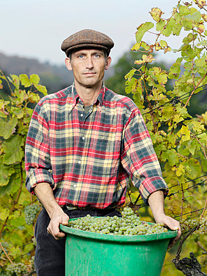A vintner holding a bucket full of grapes - p3018509f by Paul Hudson