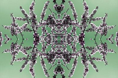 Blühende Zweige - p4150292 von Tanja Luther