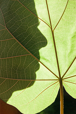 Shadow of Face Behind Leaf - p1262m1083700 by Maryanne Gobble