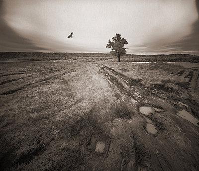 Einzelner Vogel auf endloser Brachlandschaft - p1653m2233646 von Vladimir Proshin