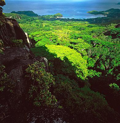 Regenwald auf den Seychellen - p1016m792612 von Jochen Knobloch