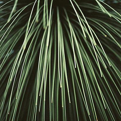 Abstrakte Pflanze - p1195m1128779 von Kathrin Brunnhofer
